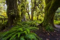Hoh Rainforest by Cody York_0157