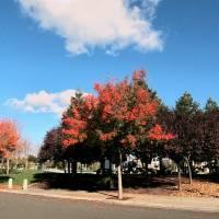 Fall Colors at the Park - IMG_2258 by Richard Thomas