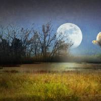 moon light barn owl Art Prints & Posters by r christopher vest
