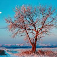 Moon over Sunrise Tree Art Prints & Posters by Neal Sanche