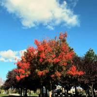 Autumn colors - IMG_2259 by Richard Thomas