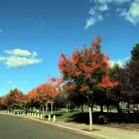Fall Park Scene - IMG_2266 by Richard Thomas