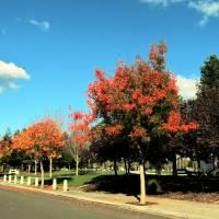 Fall Park Scene - IMG_2262 by Richard Thomas