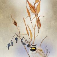 nice weed on white horned lark by r christopher vest