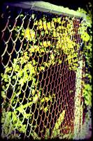 Rusty chain link fence plants frame filter.