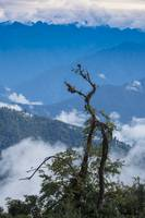 Ancient Snag and Himalayan Mountains