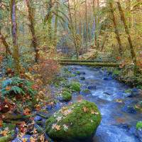 Art Of Autumn Art Prints & Posters by Photography Moments