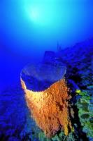 Giant Barrel Sponge Mouth