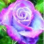 Rose of Magic Prints & Posters
