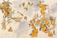 Fruit trees, 3 April 1863 by Edward Lear, 1863