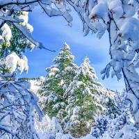 A White Christmas Art Prints & Posters by Cheryl Marie