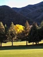 Hobble Creek UT yellow tree 1
