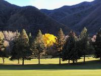 Hobble Creek UT yellow tree 4