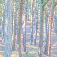 Pastel trees Art Prints & Posters by Susan Leonard