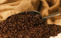Roasted coffee beans metal scoop coffee sack backg
