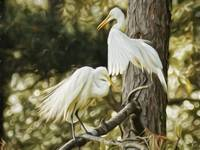 Artistic Egret Couple