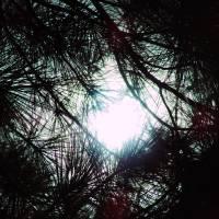 """Sun Thru Pines"" by RobertF"