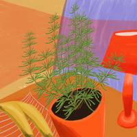 Rosemary and Red Lamp