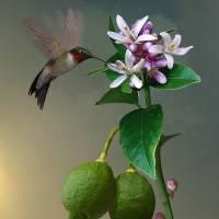 LemonTree And Hummingbird by I.M. Spadecaller