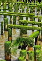 Pilings And Sea Grass