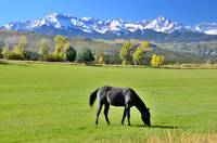 Horse in a Colorado pasture