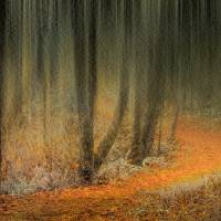 Carpeted Forest Art Prints & Posters by Don Schwartz