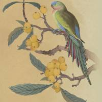 Parrot In Loquat Tree by I.M. Spadecaller