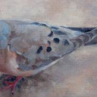 """Mourning Dove"" by pamelapoll"
