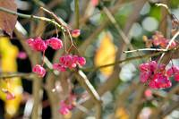 BeautifulSmallPinkFlowersOfAutumn