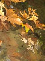 Autumn Abstraction