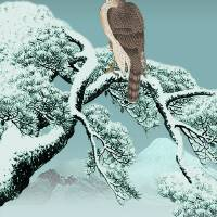 Hawk On Snowy Pine by I.M. Spadecaller