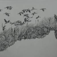 """""""DSC_0704"""" by LauraGooley"""