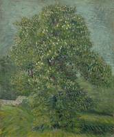 Horse Chestnut Tree in Blossom Paris, May 1887 Vin