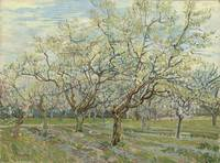 The White Orchard Arles, April 1888 Vincent van Go