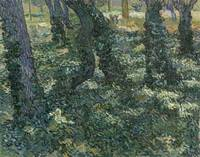 Undergrowth Saint-Rémy-de-Provence, July 1889 Vinc