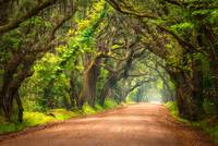 Edisto Island South Carolina Dirt Road Landscape C