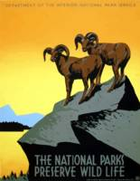 WPA Vintage National Parks Wildlife Travel