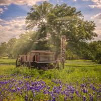 """Bluebonnet Welcome Wagon"" by LynnBauer"