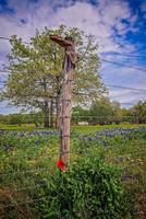 Bluebonnets and Red Poppy Boot