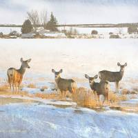 deer overlooking our home by r christopher vest