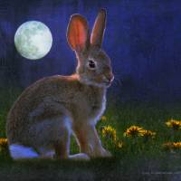 baby cottontail by moonlight by r christopher vest