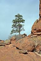 Red Rocks Tree