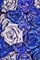 Blue Holiday Roses