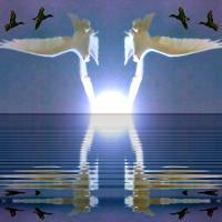 Doves Ducks and Sunspot by Richard Thomas