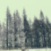 Vintage Trees by Lisa Rich
