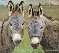 donkey friends
