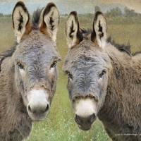 donkey friends by r christopher vest