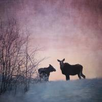 Two Moose Sunset Art Prints & Posters by Priska Wettstein