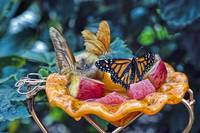 Butterfly Lunch