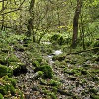 Woodland in Northern End of Monk's Dale Art Prints & Posters by Rod Johnson